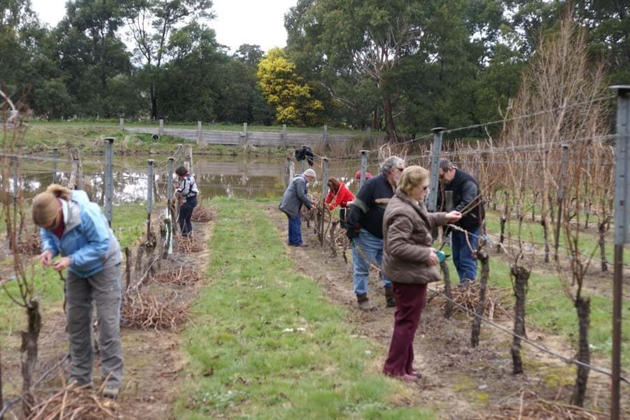 Hands On Pruning Day