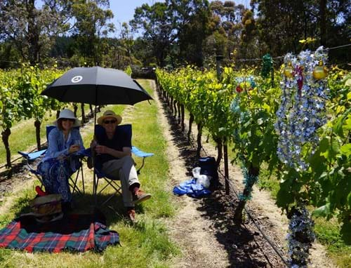 Picnic in the Vines 2016