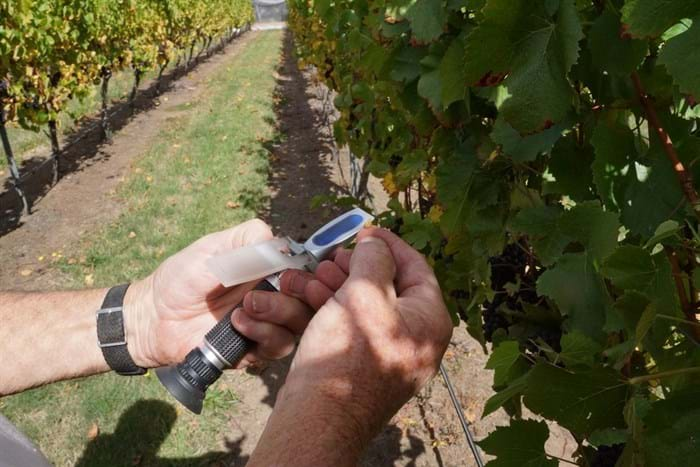 I use a Refractometer which reflects the sunlight through a drop of grape juice and measure the sugar (or Brix) content.