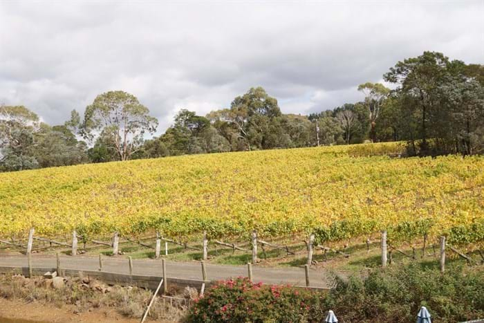 Colour in the Chardonnay Block