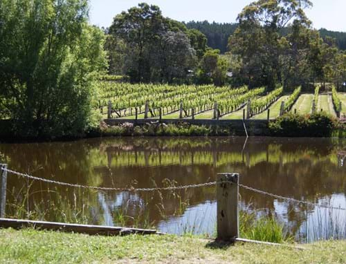 Gisborne Peak Winery Vineyard